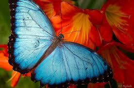 butterfly www.stevemonahan.me
