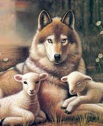 wolf and lamb picture